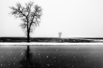 L'albero riflesso
