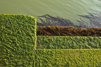 Alghe a Venezia