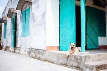 Vietnam Pup