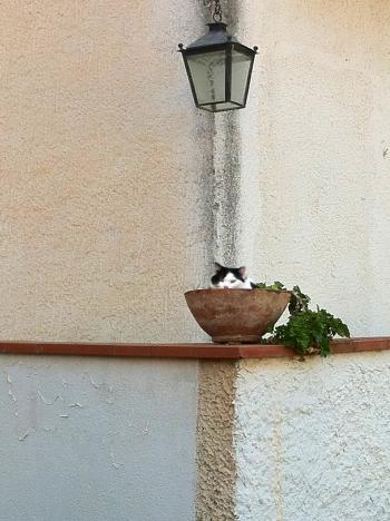 Il gatto del vicino