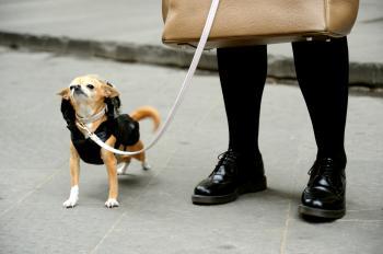 FASHIONABLE DOGGY