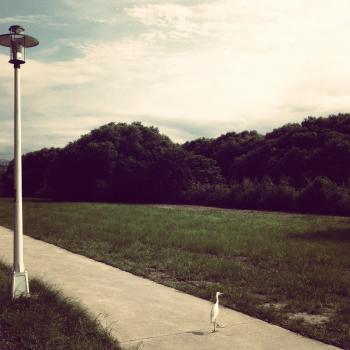 xindian park 2012