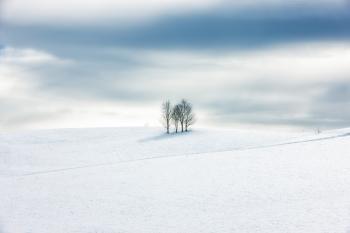 Bianco manto