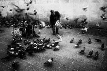 Pigeon man 2