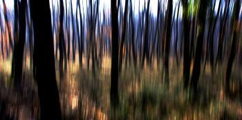 Nel bosco incantato