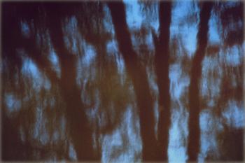 The Hidden Dance of Trees 02