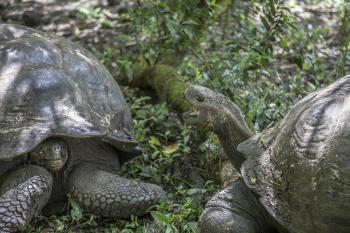 02 Tortoise Wars