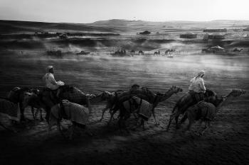 Camel Festival at Al Dhafra
