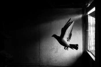 A flutter (Un battito d'ali)