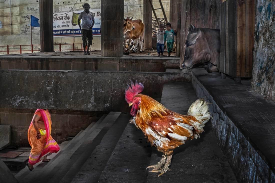 Md Enamul Kabir - Coexistence
